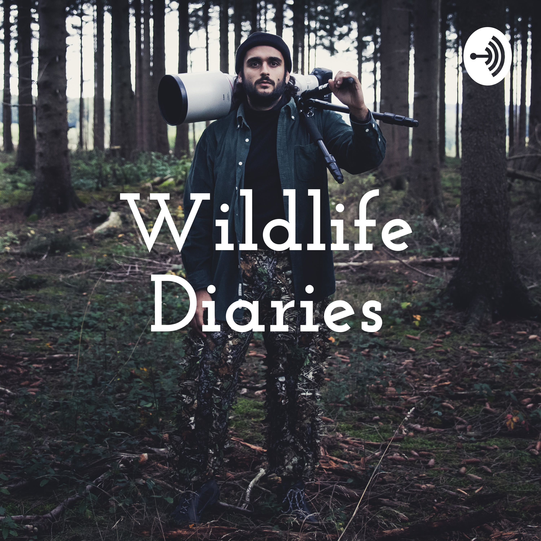 Pilotfolge: Eure Fragen, Ich und der Anfang des Podcasts.