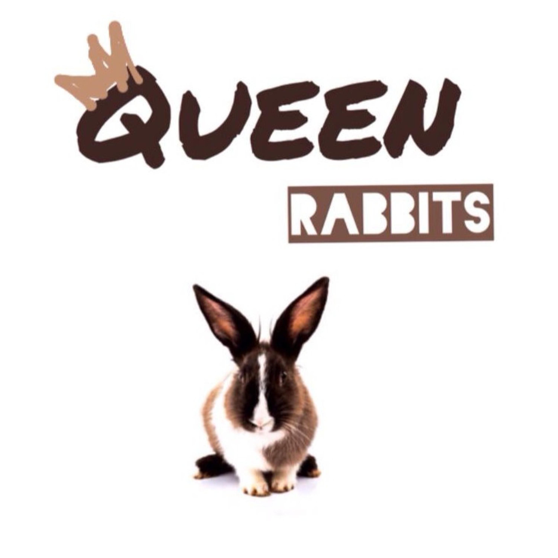 Episode 8 Queen Rabbits Ngomongin film 365 days