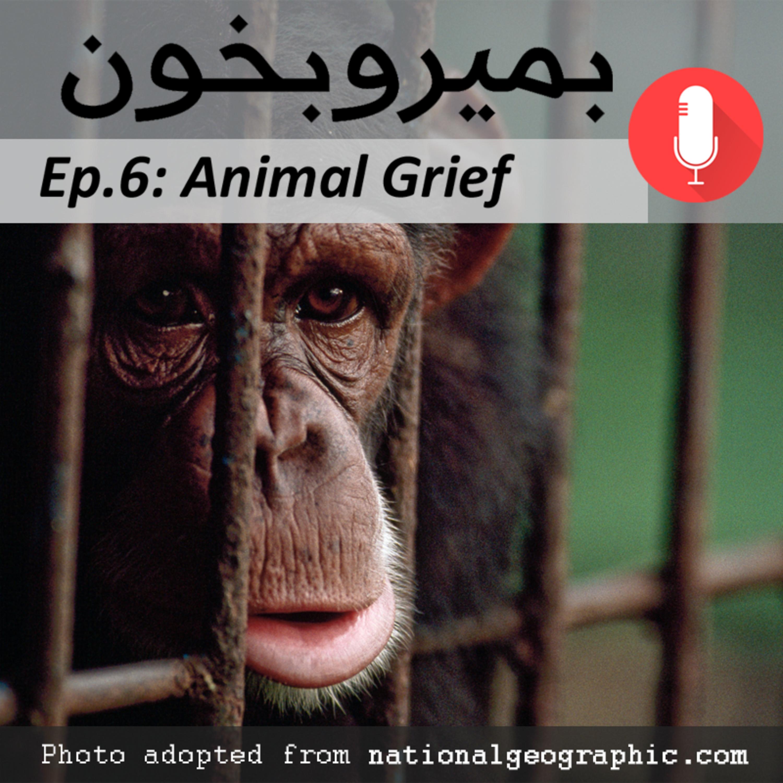 Animal Grief – غم و اندوه حیوانات