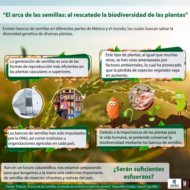 El arca de las semillas, al rescate de la biodiversidad de plantas.