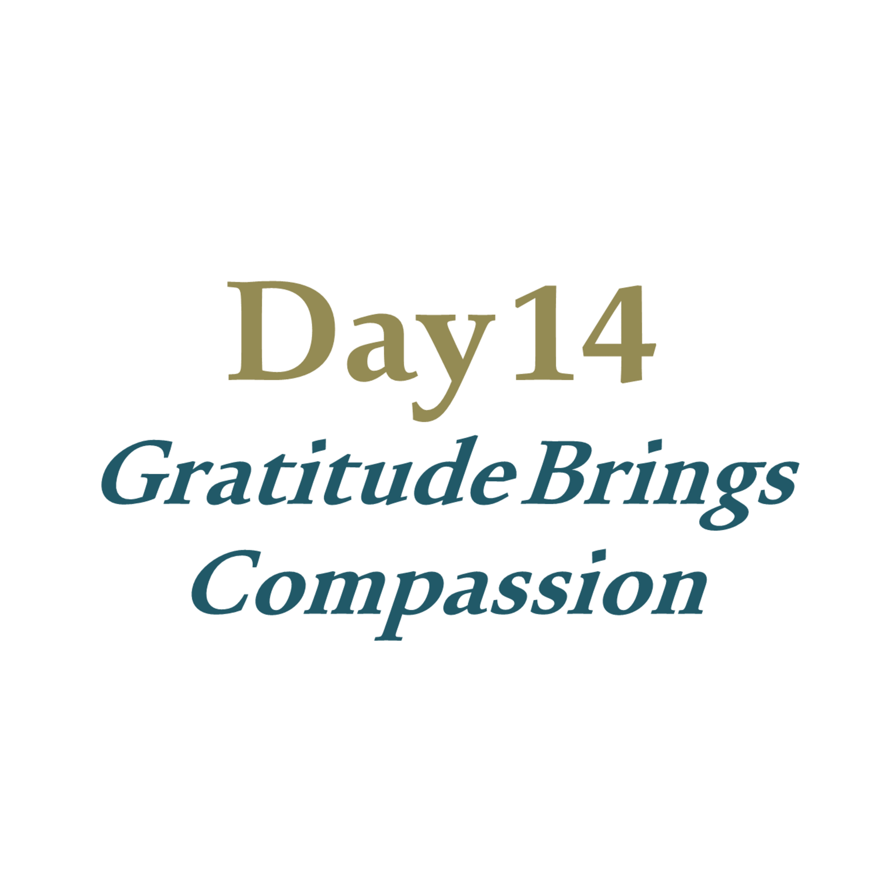 Day 14 - Gratitude Brings Compassion