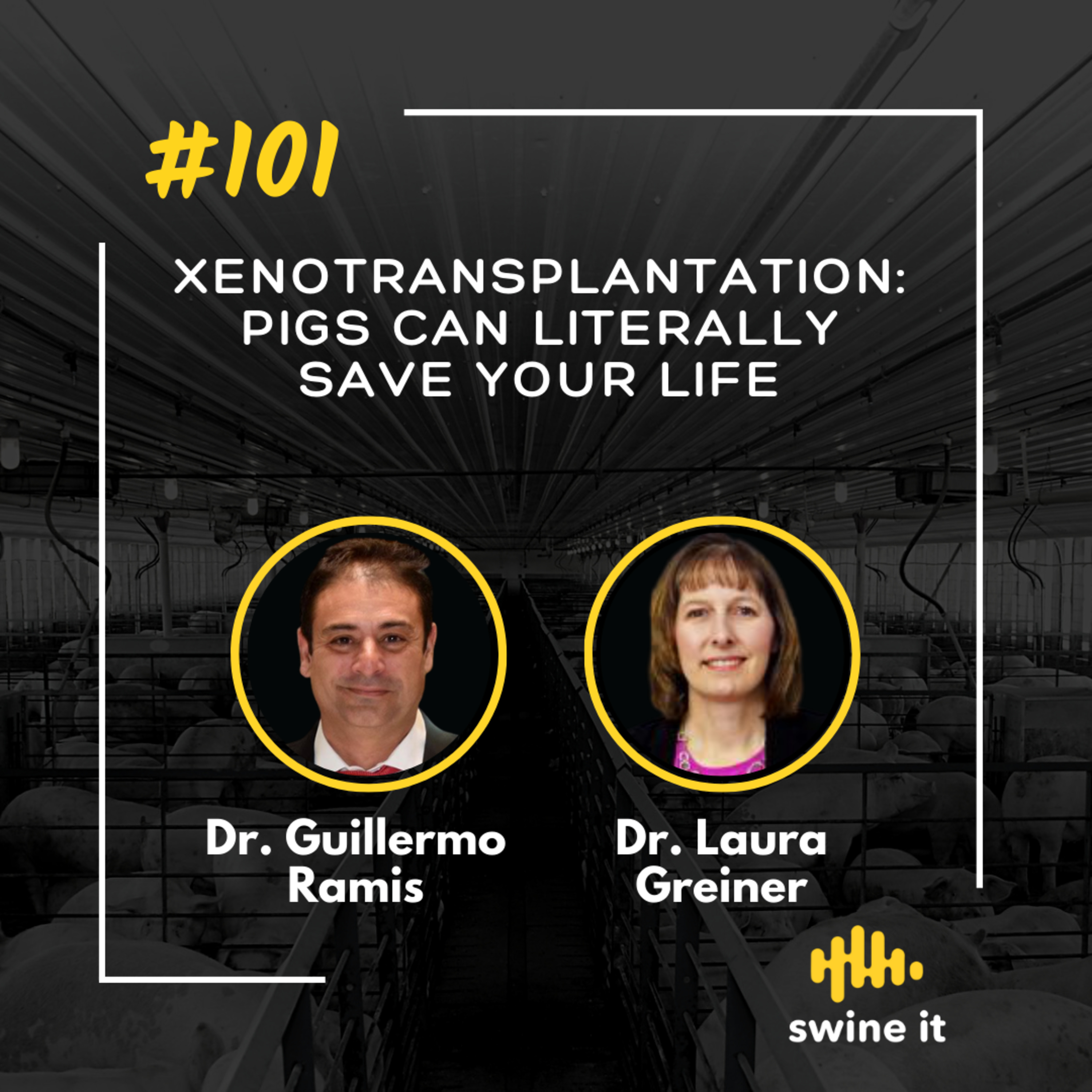 Xenotransplantation: pigs can literally save your life - Dr. Guillermo Ramis