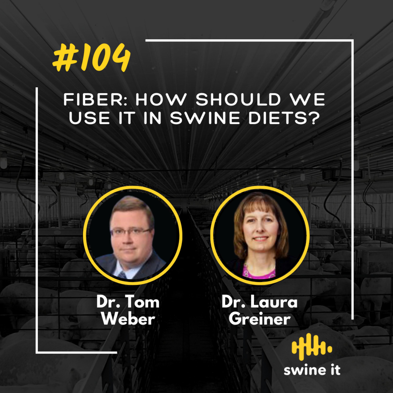 Fiber: how should we use it in swine diets? - Dr. Tom Weber
