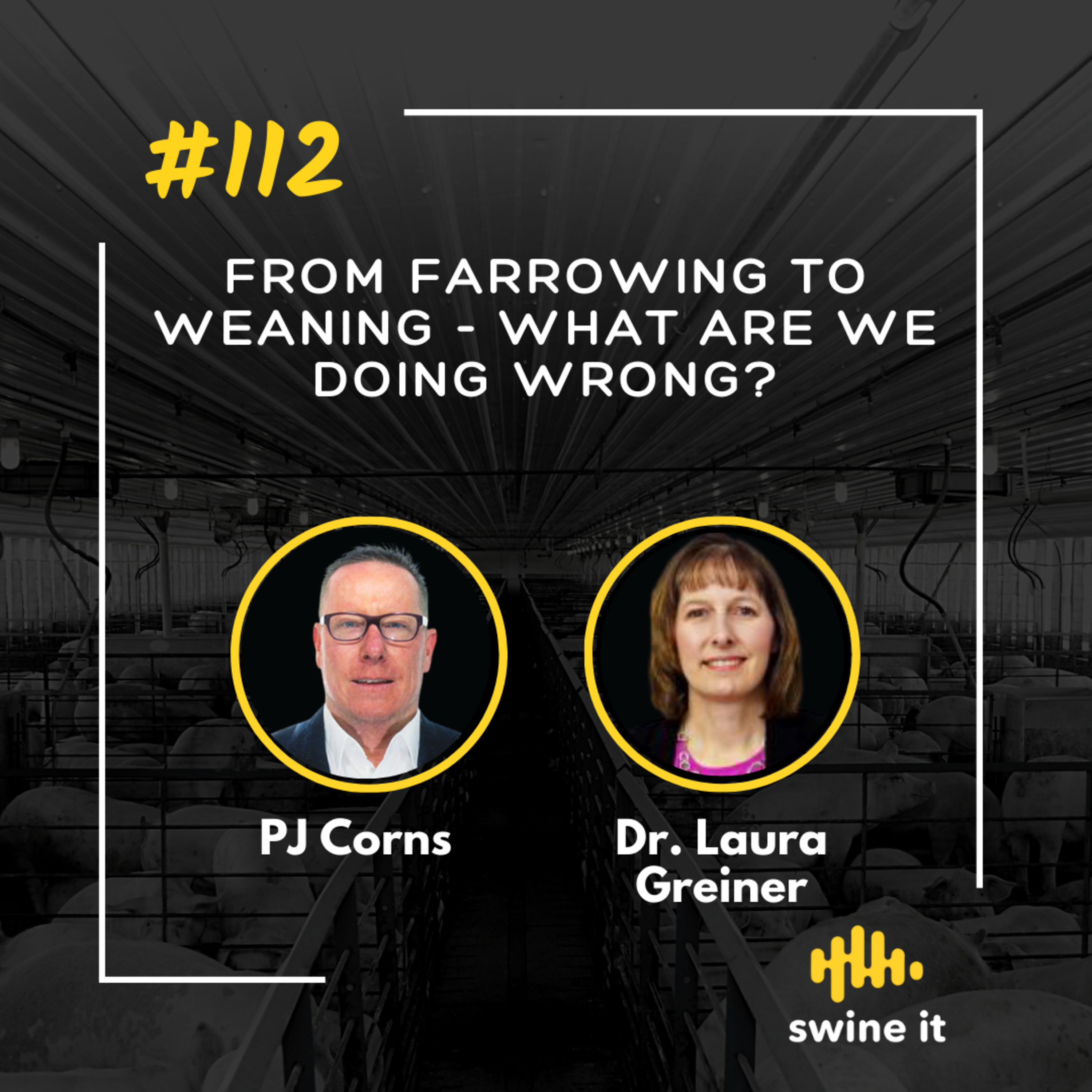 From farrowing to weaning - what are we doing wrong? - PJ Corns