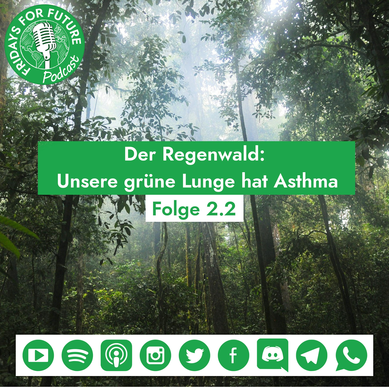 2.2 | Der Regenwald: Unsere grüne Lunge hat Asthma