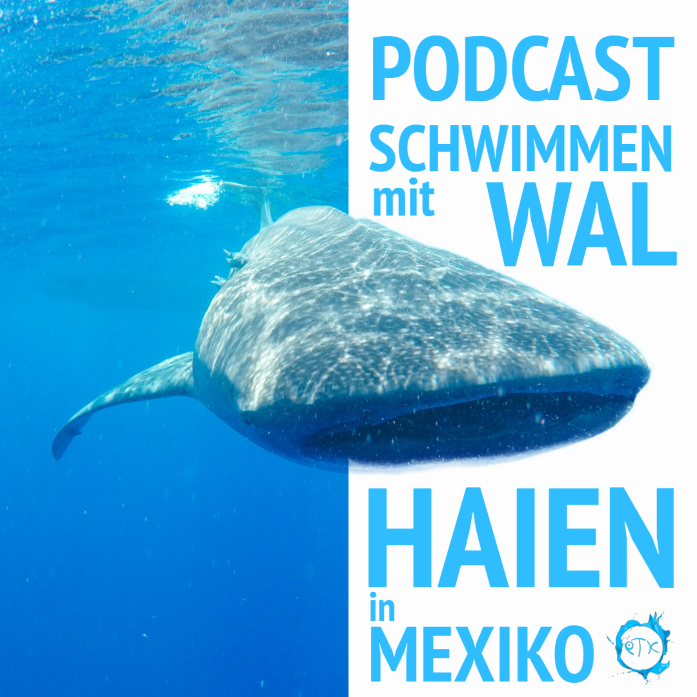 Schwimmen mit Walhaien in Mexiko - Urlaubspodcast - Episode 2 Teil 1