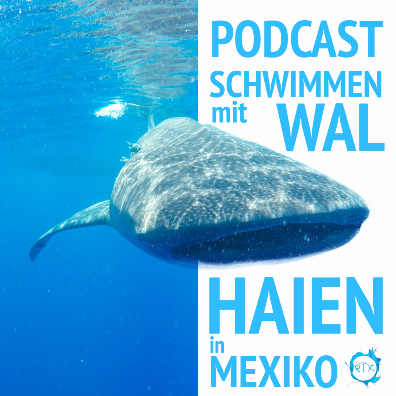 Schwimmen mit Walhaien in Mexiko - Urlaubspodcast - Episode 2 Teil 2