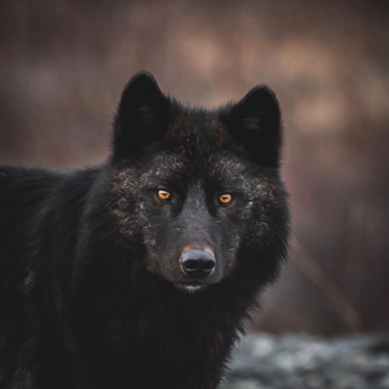 #9 Der wilde Yukon. Wildlife Talk mit Peter Zenkl