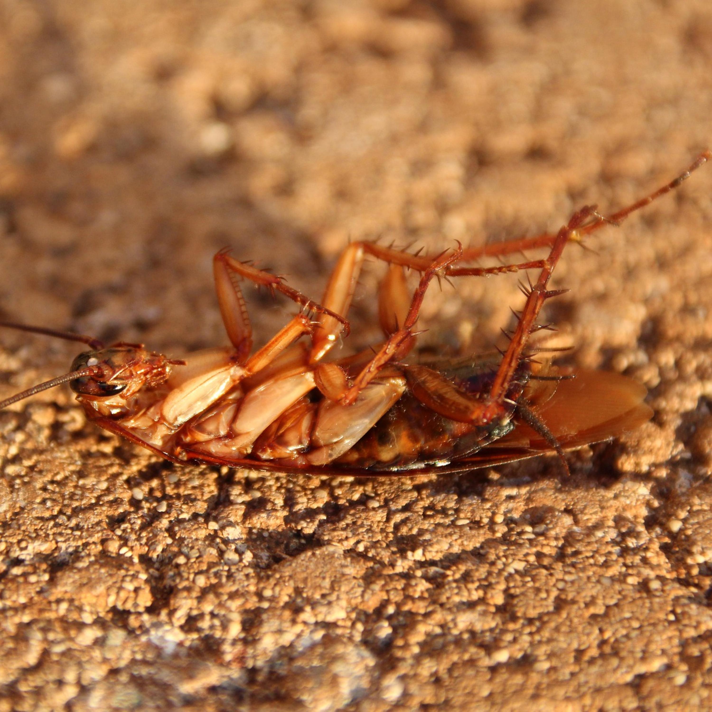 Como eliminar baratas e demais insetos da sua casa