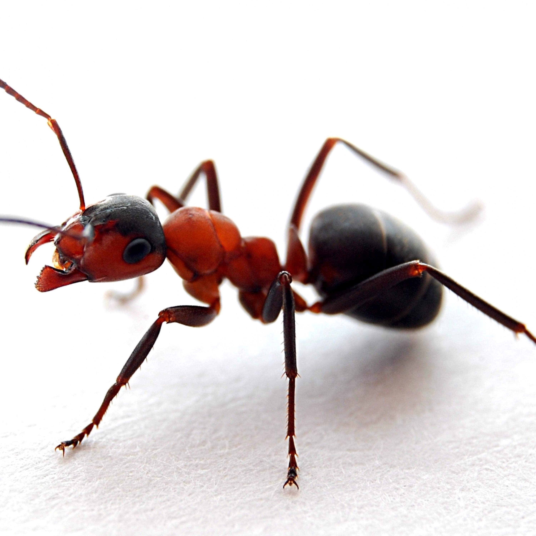 Como eliminar os insetos de dentro de casa: formigas, traças e aranha