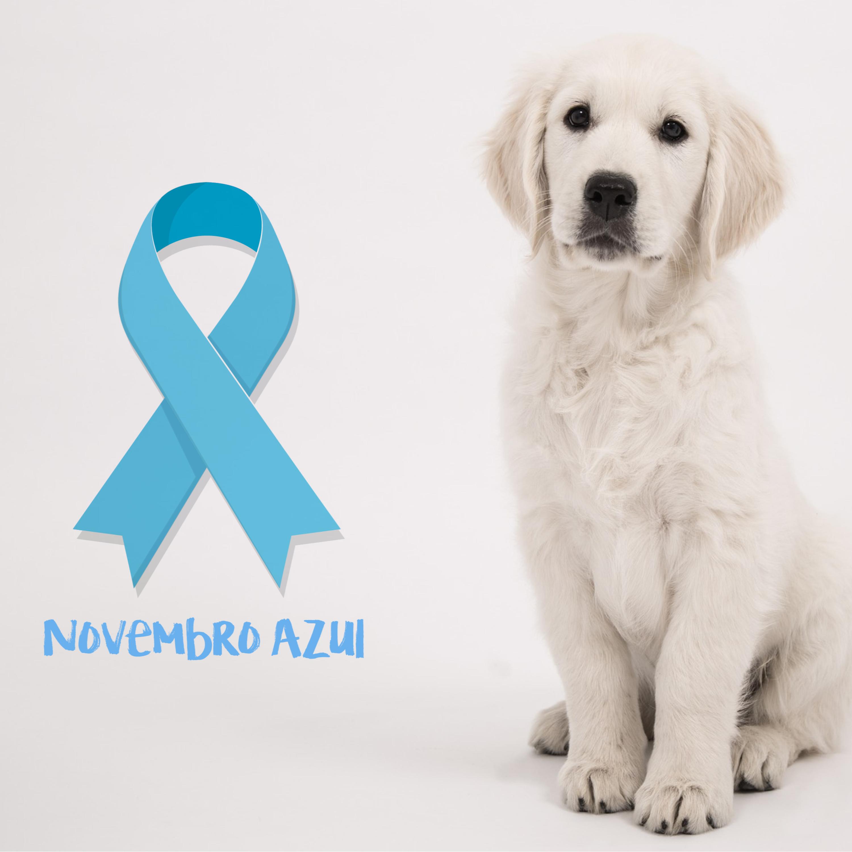 Campanha 'Novembro Azul' também mobiliza o mundo pet