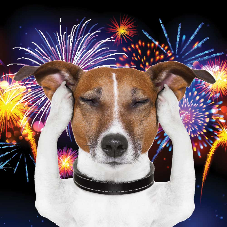 Entenda porque animais sofrem com fogos de artifício