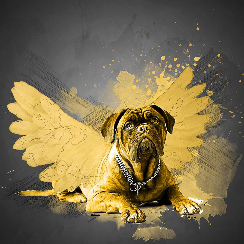 Março amarelo: atenção para a saúde renal do seu pet