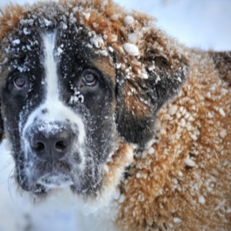 Conheça os cuidados com os pets durante os dias mais frios do ano