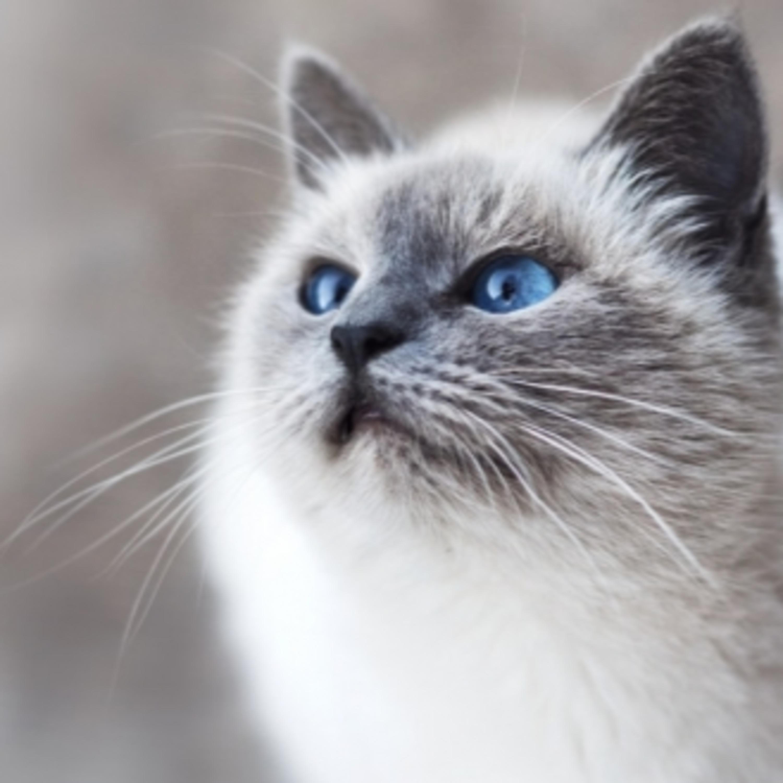 Parte II: dicas para o tutor não errar nos cuidados com os pets