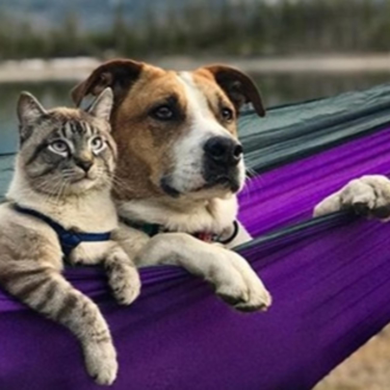 Entenda mais sobre as otites em cães e gatos e tire suas dúvidas