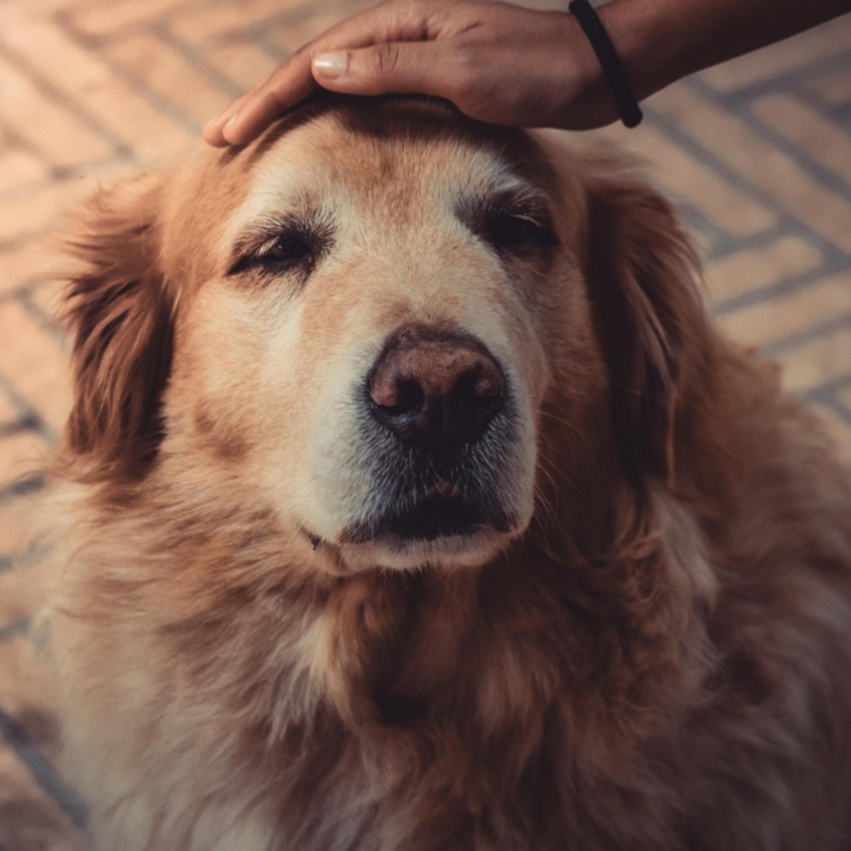 Pets idosos: o que esperar do envelhecimento do animal de estimação?