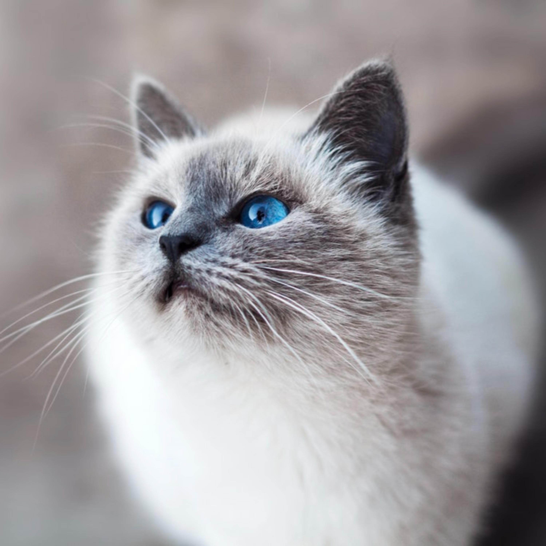 Sete curiosidades sobre os gatos domésticos