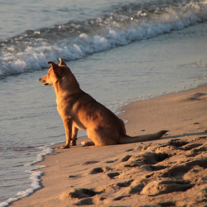 Ansiedade e solidão afetam cães e gatos e você pode ajudar na melhora