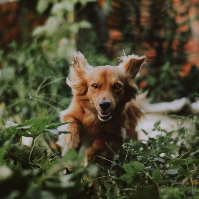 Alerta dentro de casa! Plantas tóxicas para os pets - parte II