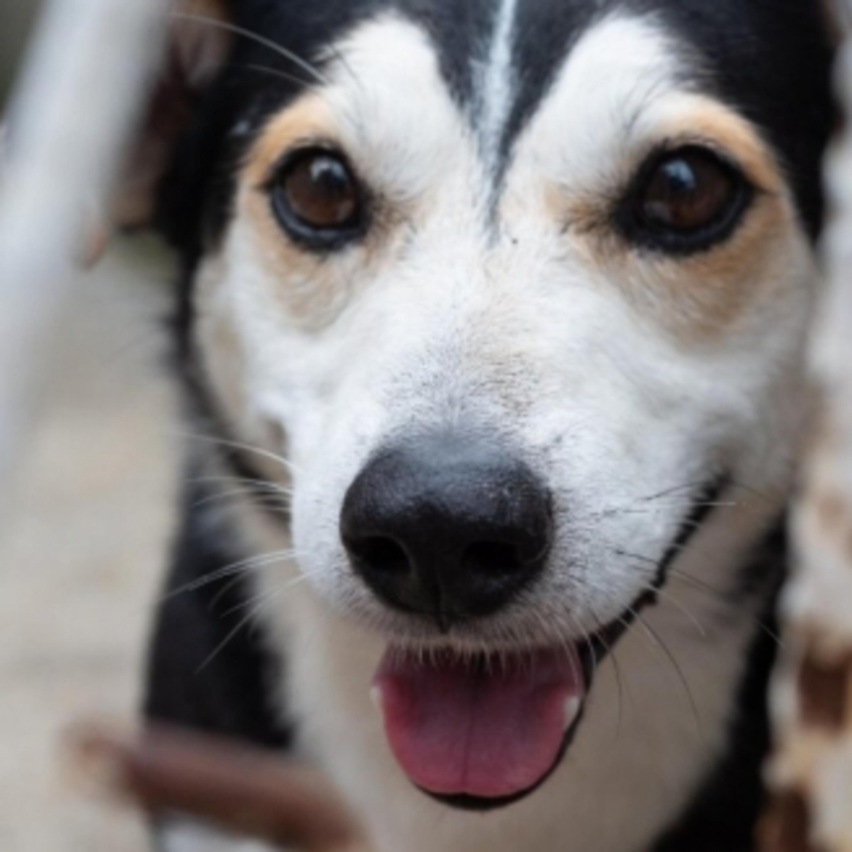 Atividade física para os cães é essencial; confira as orientações
