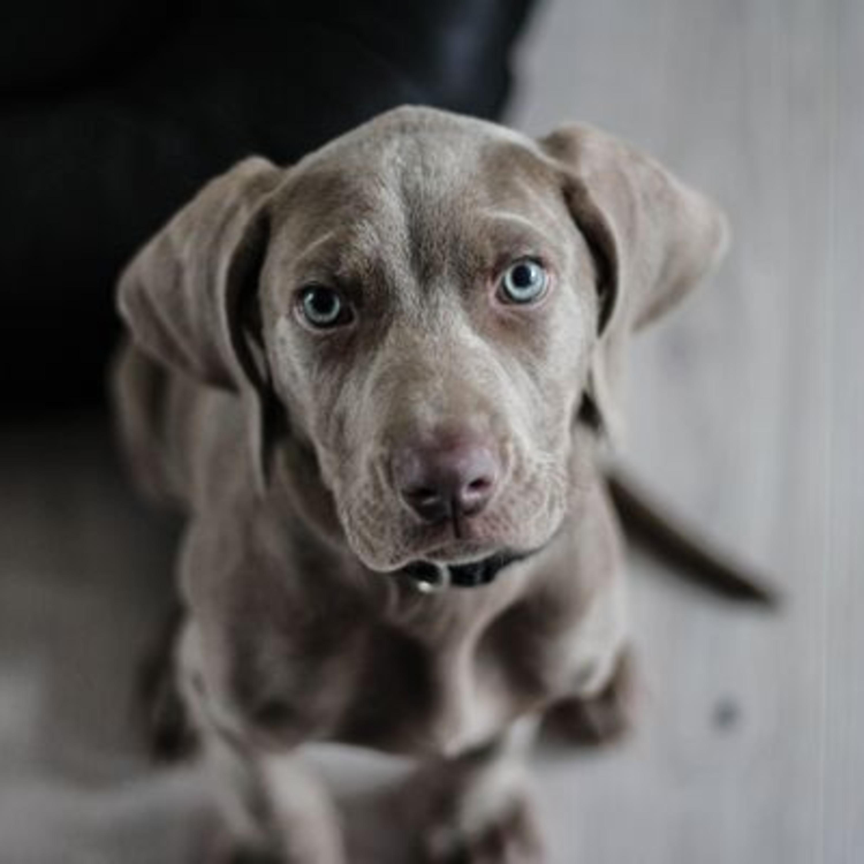 Atenção com ambiente doméstico e a lista de riscos para seu pet