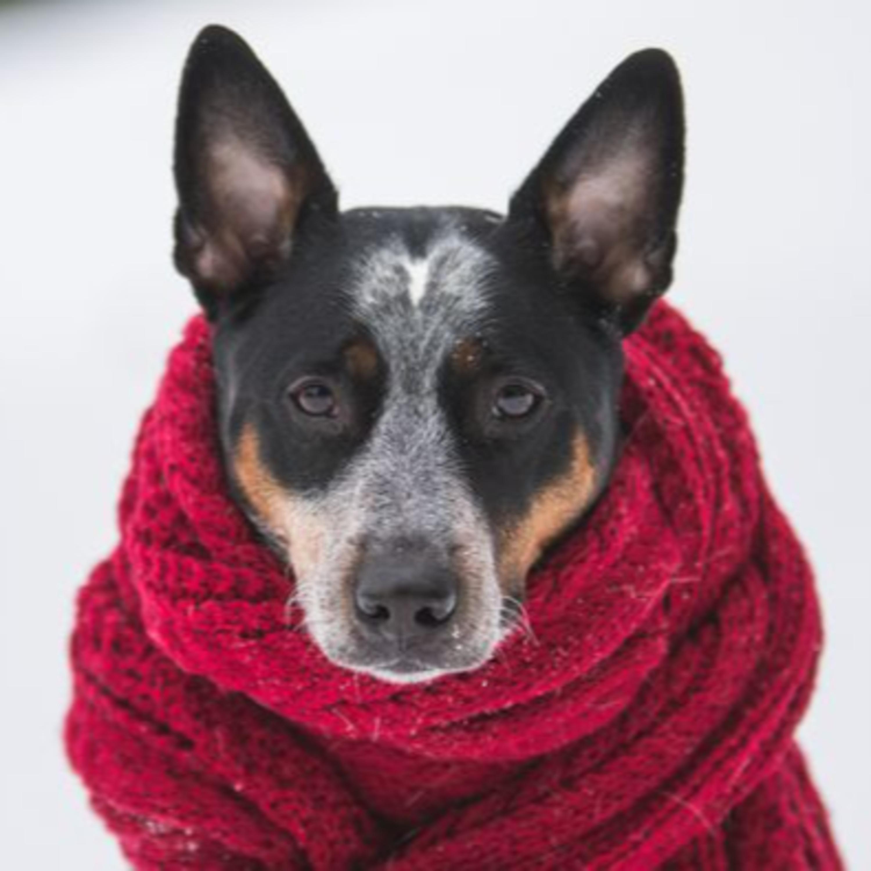 Pet também sente frio? Orientações e cuidados com cães e gatos no inverno