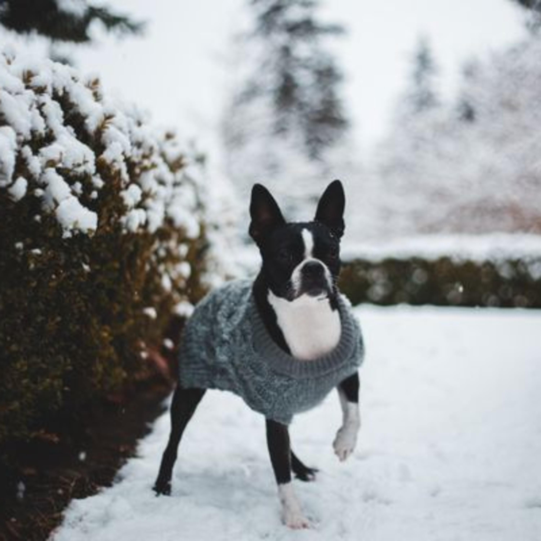 Gripe canina: o que os tutores precisam saber para proteger os cachorros