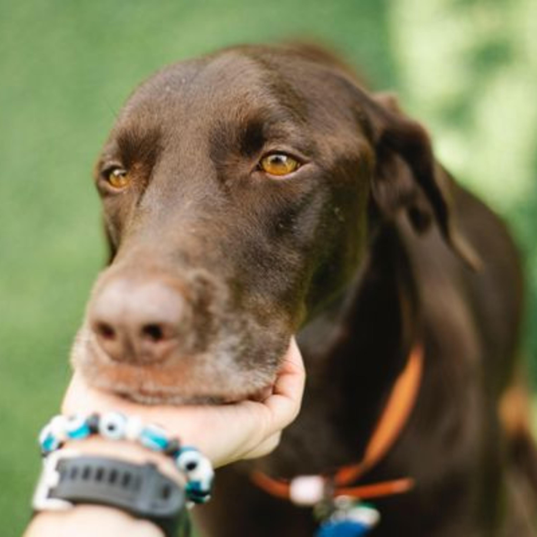 O alerta sobre olho seco nos cachorros, que pode levar à perda da visão