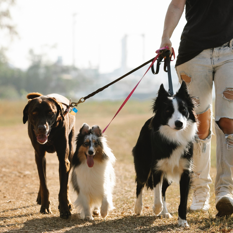 Dicas para você fazer um passeio seguro e legal com seu cão