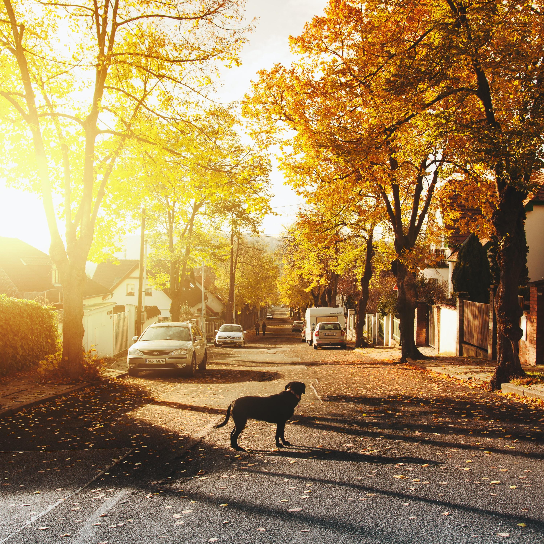 Os perigos que seu animal está sujeito ao ficar solto e sozinho pelas ruas
