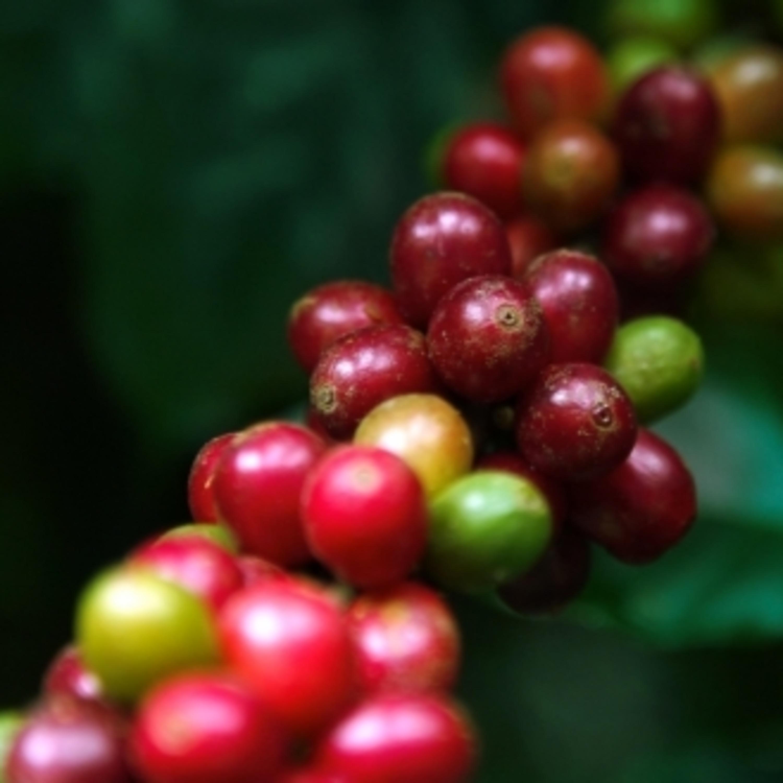 Capixabas criam plataforma baseada no barter para comercializar café