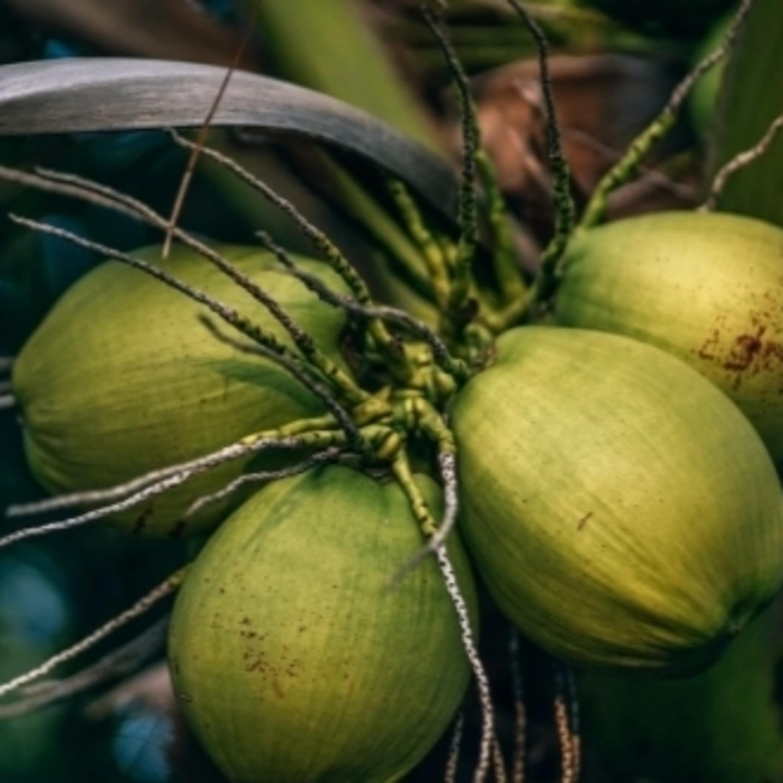 Processo que transforma casca de coco em etanol tem patente capixaba
