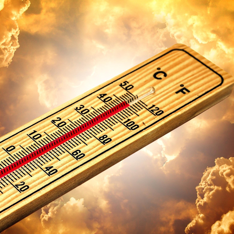 Entenda como as pessoas e os animais reagem às altas temperaturas