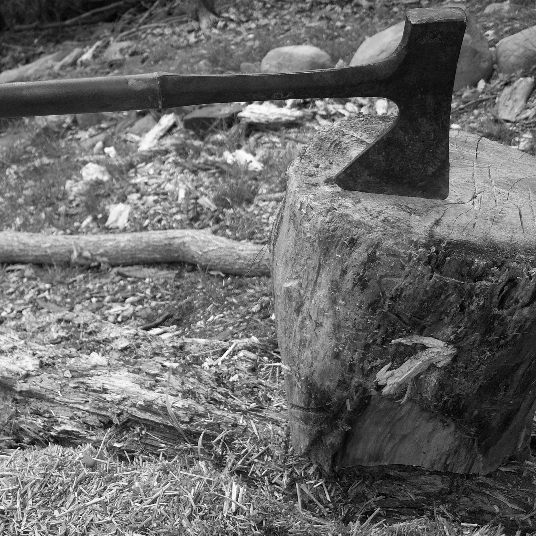 Desmatamento pode ser uma das causas do surgimento da Covid-19