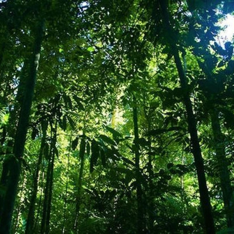 Pandemia vai influenciar na aceleração do desmatamento na Amazônia