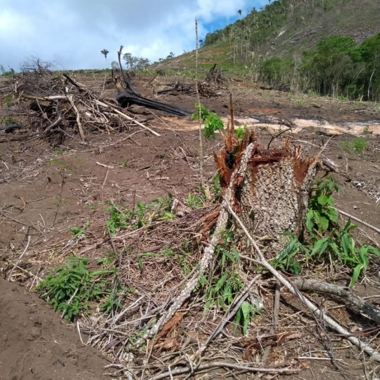 Enquanto o olhar é para a pandemia, desmatamento aumenta no país