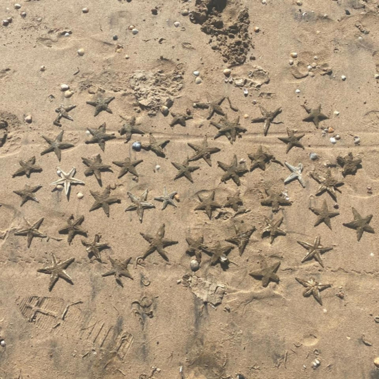 Poliquetas e estrelas-do-mar na areia de Camburi: entenda o fenômeno