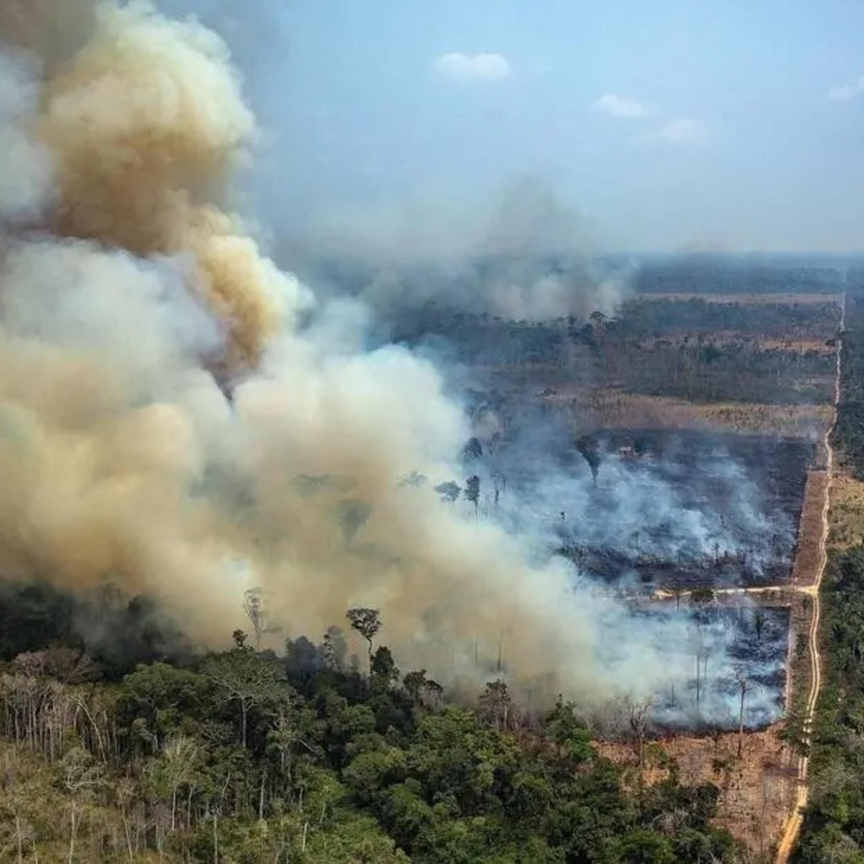 Desmatamento da Amazônia prejudica imagem do Brasil no exterior