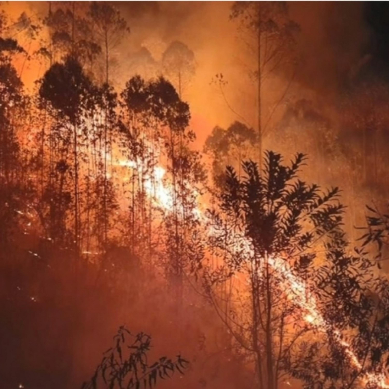 Da Austrália ao Pantanal: incêndios colocam o meio ambiente em risco