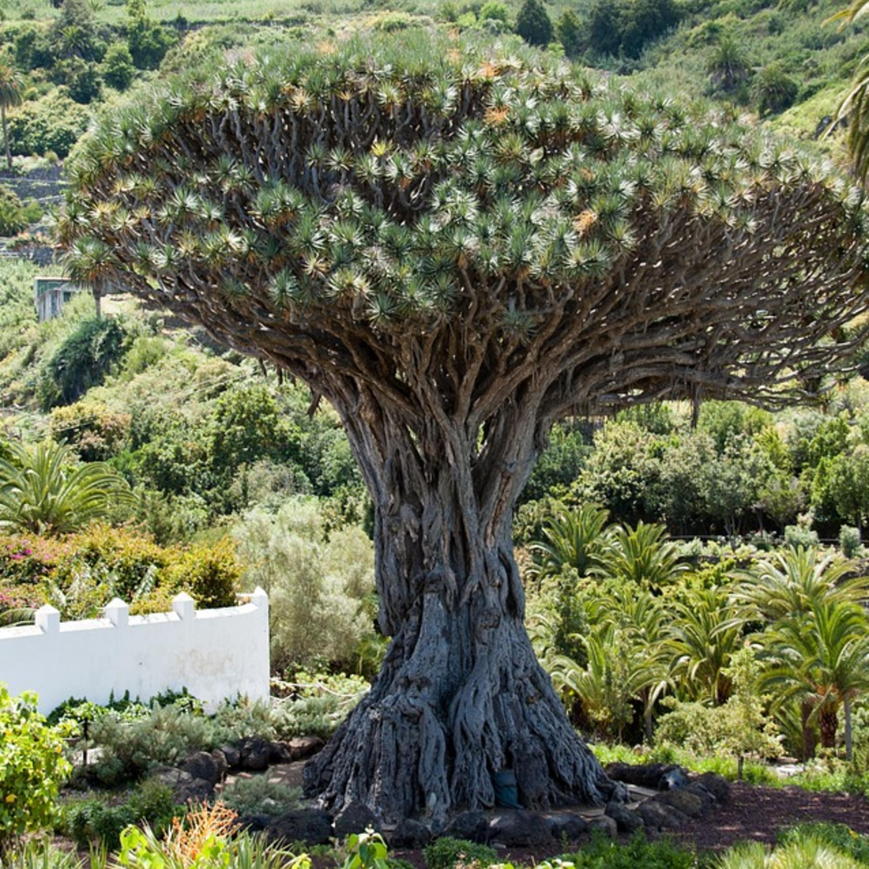 Dia da árvore, queimadas e a importância de se preservar o bem