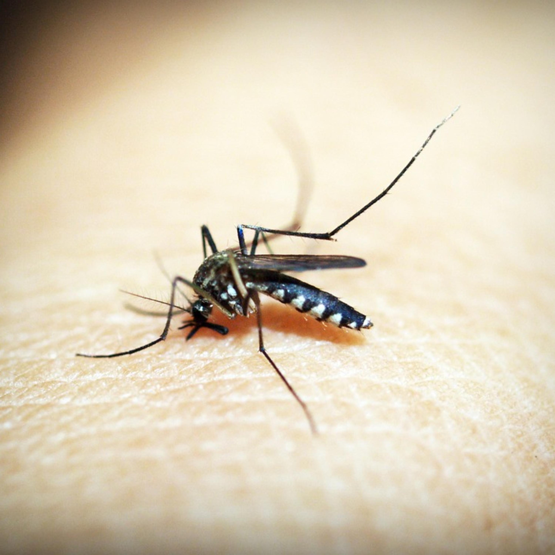 Mesmo na pandemia, risco da dengue não podem ser esquecido