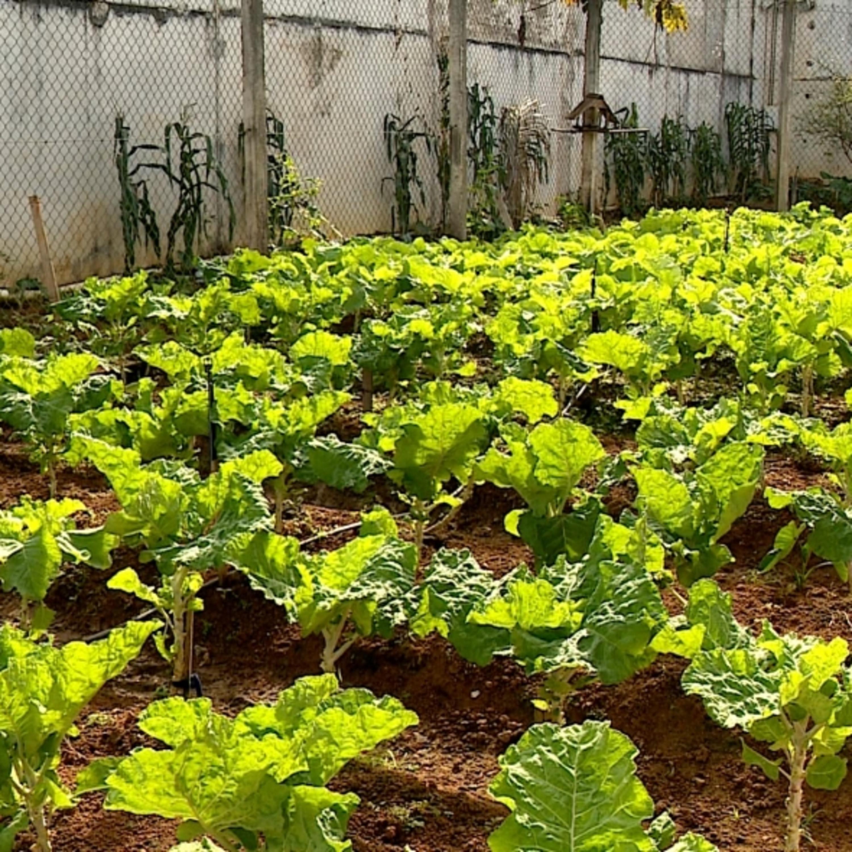 Horta caseira: ouça os benefícios ao meio ambiente e à saúde