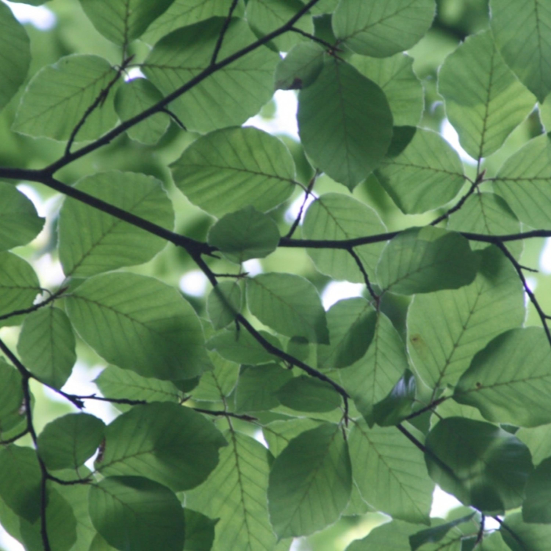 Inteligência natural: afinal, plantas 'falam' e têm 'sentimentos'?
