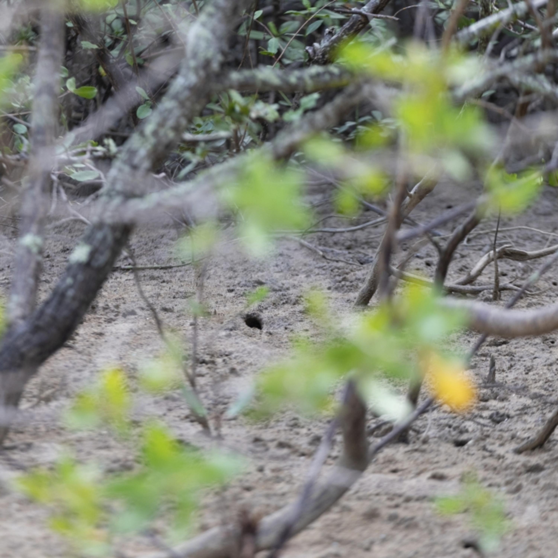 Conheça o projeto educativo para preservação de manguezais de Vitória