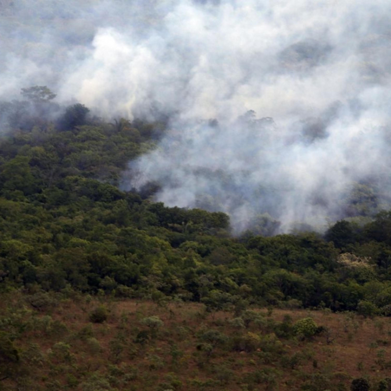Vegetação em chamas no ES: o que explica o aumento dos incêndios?