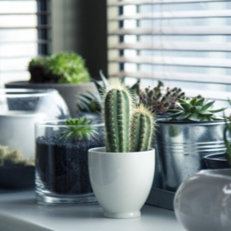 Plantas em casa: conheça os principais erros que podem prejudicá-las