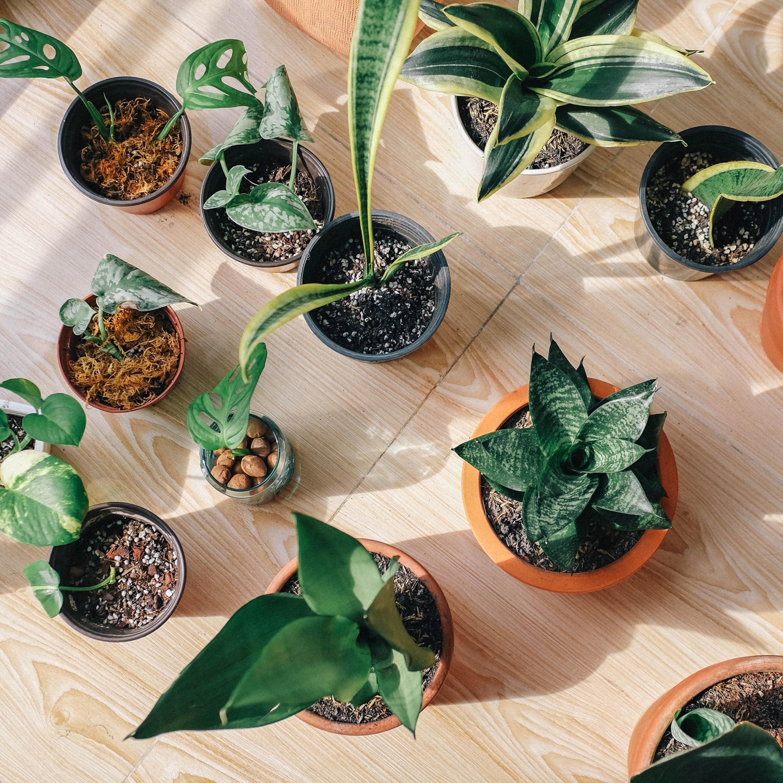 Como cuidar das plantas em vasos dentro de casa