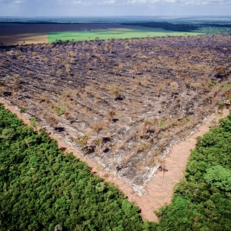 Seca: como o desmatamento da Amazônia impacta na sua conta de luz