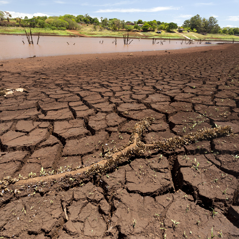 Como a estiagem já eleva preços de produtos da agricultura e pecuária